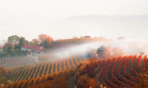 意大利原瓶进口DOCG干红酒干白葡萄酒招商代理加盟批发团购